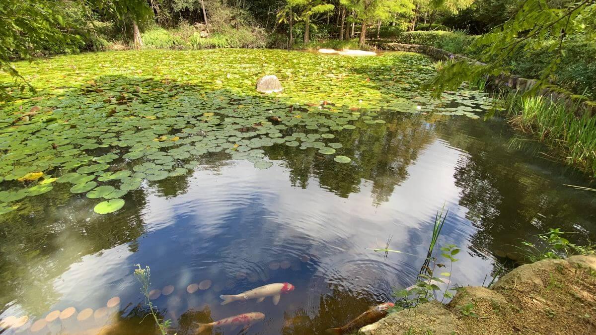 緑化公園池